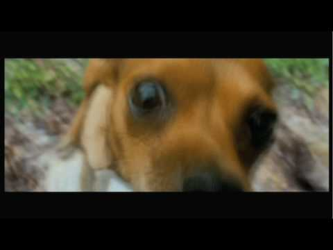 Beverly Hills Chihuahua - Face Off Clip
