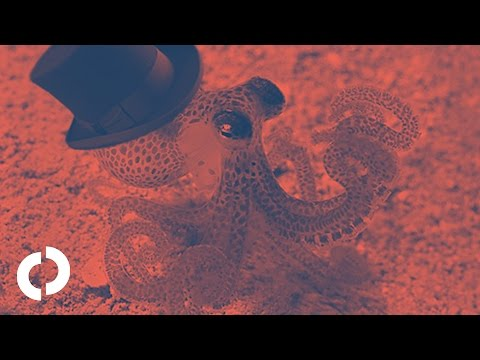 Why do octopuses wear top hats?