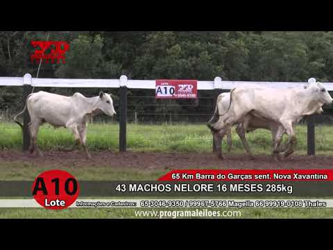 LOTE A10