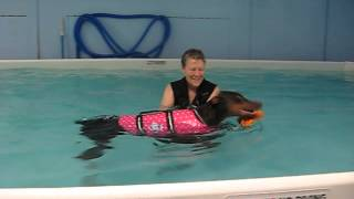 Doberman Dog's 2nd Swimming Lesson - Water Therapy In Ohio