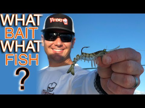 Soft Plastic Bait Video 1  (lures, Fishing Tips And Techniques)