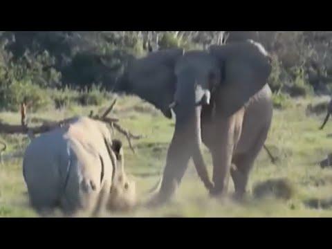 Носорог - танк