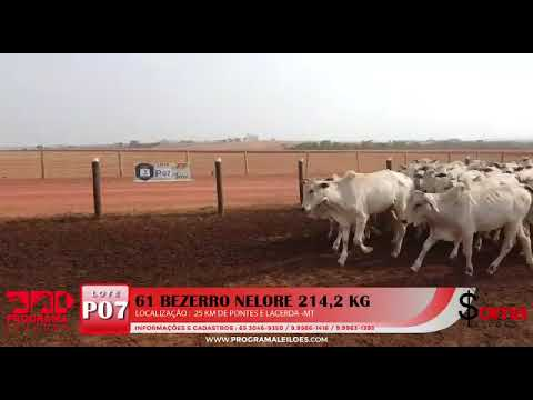 Lote P07