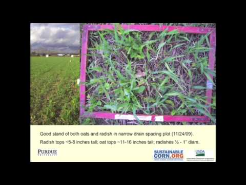 Speed Science: Cover Crops & Climate Change