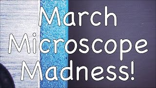 March Microscope Madness! (Week 4 - 2015)