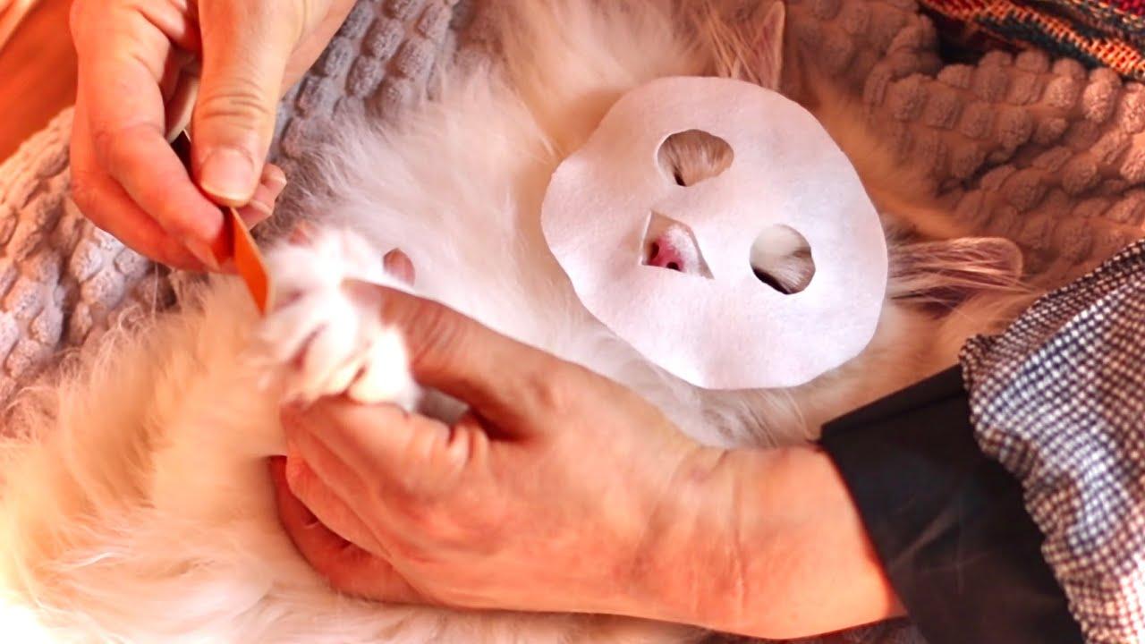 ★ASMR★ Entspannung mit Kitten Massage + Schnurren | Dream Play ASMR