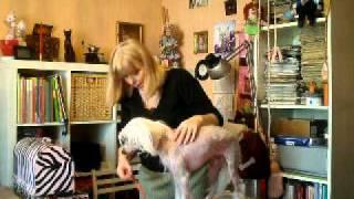 видео мастер класс по замерам собак 002
