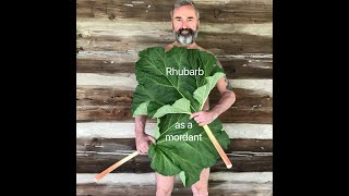 How to use Rhubarb leaves as a mordant for natural dyeing