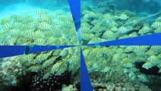 Diaporama semi-submersible à Rangiroa, Tahiti