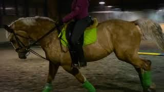 конная тренировка