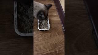 Экструдированный корм для домашних животных