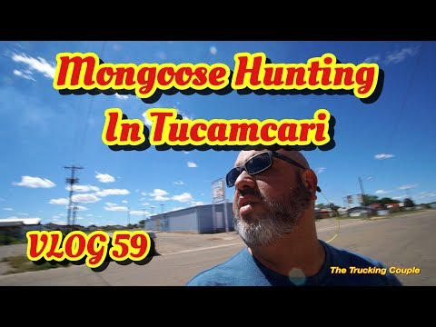 Mongoose Hunting in Tucamcari, Lunch at Watson's Hardware an