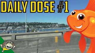 Aquarium Angelfish - Daily Dose #1