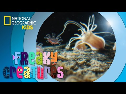 Tiny Jellyfish Become Giants | Freaky Creatures