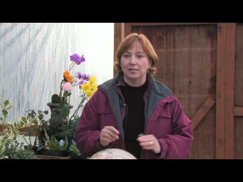 Gardening Tips & Flowers : How to Grow Coleus
