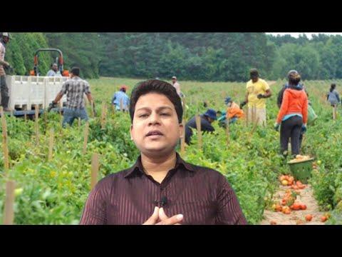 Harvest Worker Required In Australia