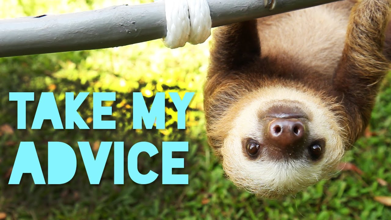 5 Pieces Of Life Advice From Sloths - YouTube