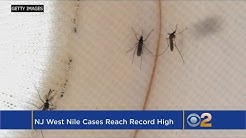 West Nile Virus Cases Hit Record High In New Jersey