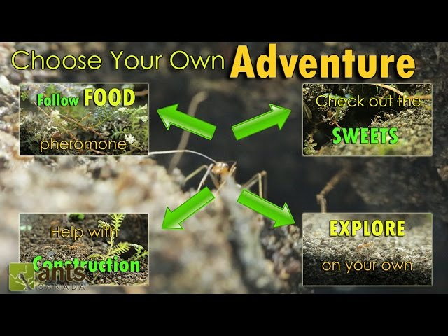 choose-your-own-adventure-a-day-in-the-life-of-an-ant-interactive