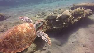 Snorkelen Oranje Bay - Sint Eustatius