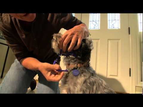 how to put a holt head collar on your dog youtube. Black Bedroom Furniture Sets. Home Design Ideas