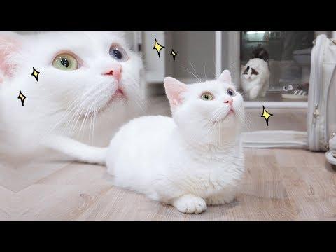 고양이가 밥 달라고 보내는 눈빛 😍