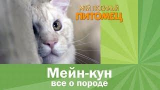 Мейн-кун. Кошка рекордсмен