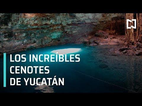 Cenotes de Yucatán resguardan flora y fauna con historia - Al Aire