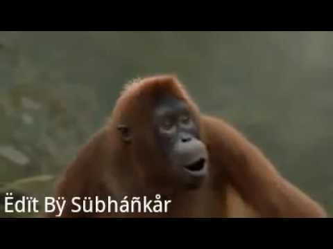 Monkey Dance In Oriya Song