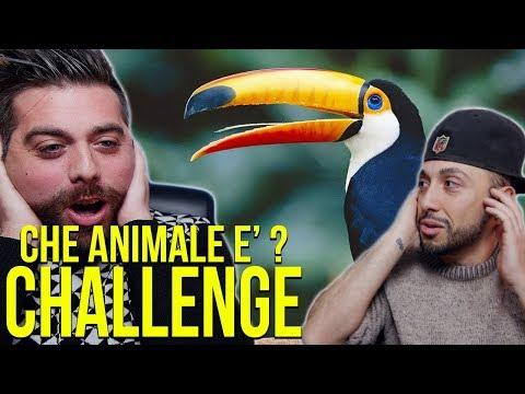 CHE ANIMALE E' ? CHALLENGE