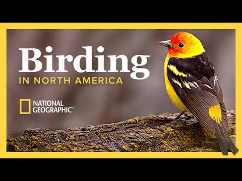 The National Geographic Guide To Birding In North America | The Great Courses