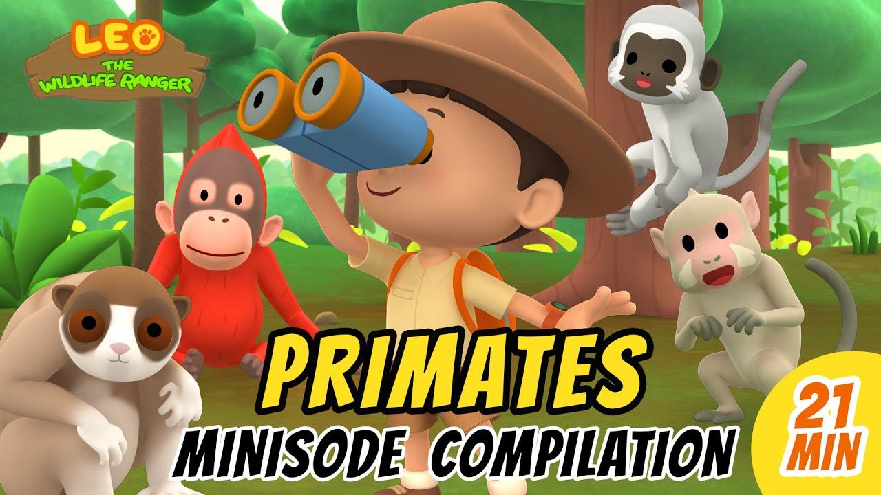 Primates Minisode Compilation - Leo the Wildlife Ranger   Animation   For Kids