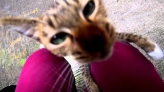 中環嘉咸街的小貓