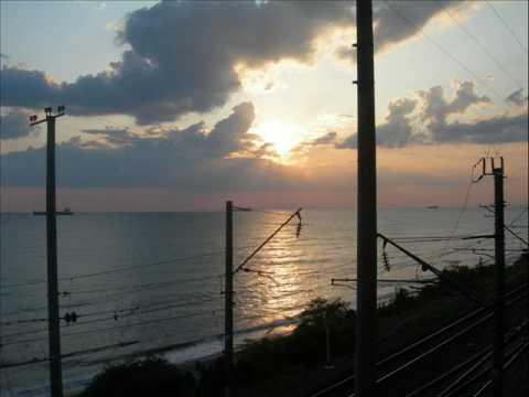 черноморского побережья картинки растения