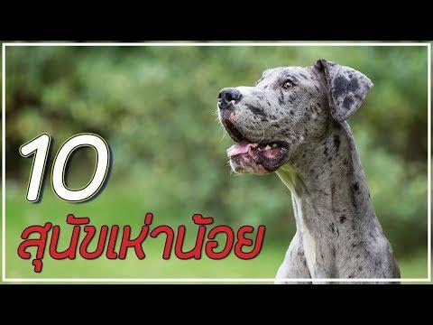 10 อันดับ สุนัขที่เห่าน้อยที่สู๊ดดด (สบายหู!!!)