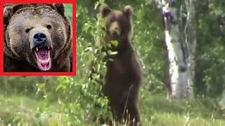 Медведя не смутили выстрелы