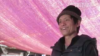 Chó H'Mông Cộc Đuôi ĐỰC ĐEN TỨ TÚC MAI HOA/Hành trình đi tìm chó bản Mông hoang dã