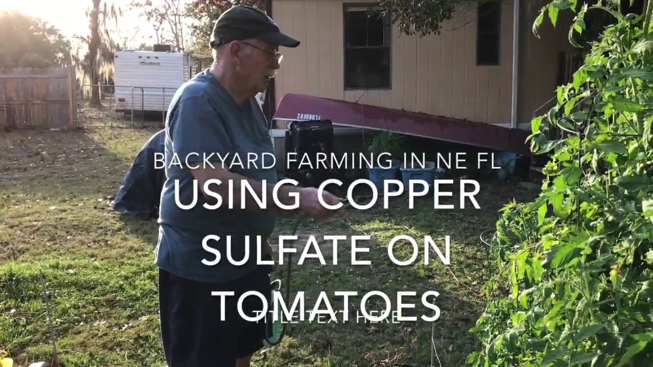 Using Copper Sulfate on Tomatoes