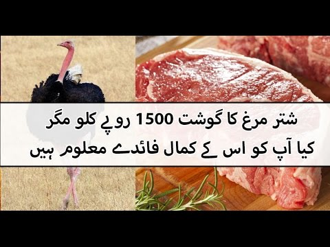 2 ostrich arrived in signature meat shop Township Lahore 00923459442750 Zain Ali farming in Pakistan
