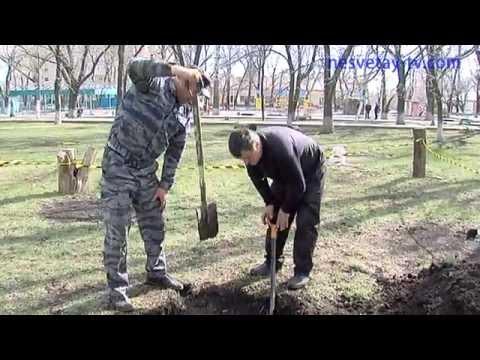 Раскопки безымянных могил