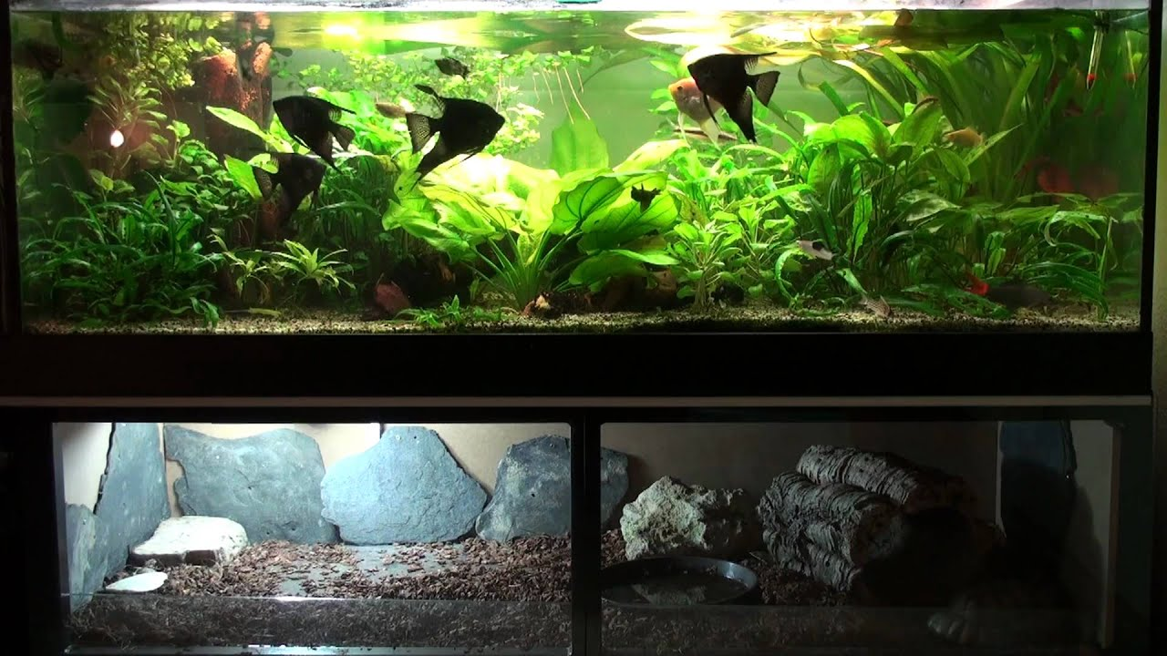 terrarium aquarium kombination