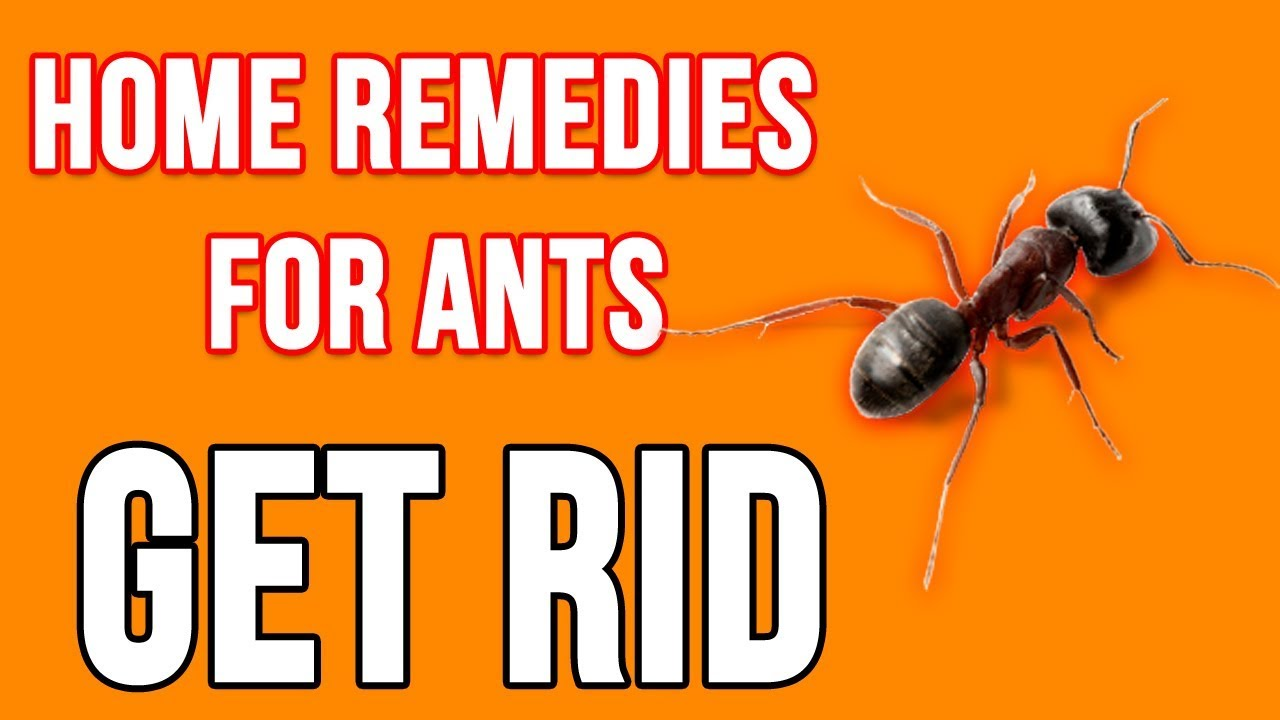 6 ways to get rid of antsace pest control | write.app