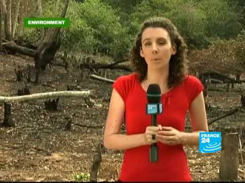FRANCE 24 Environment - Brazil's battle with deforestation