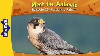 Meet the Animals 15 | Peregrine Falcon | Wild Animals | Little Fox | Animated Stories for Kids
