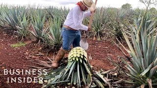 How Patrón Makes Its Tequila