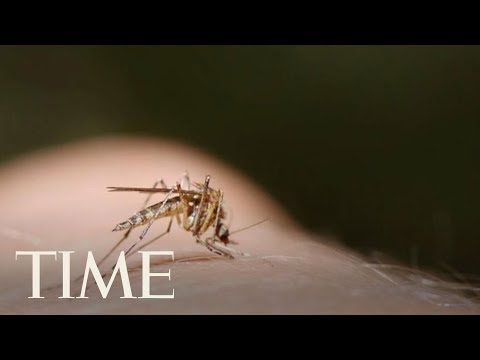 Diseases Spread By Insects Have More Than Tripled, CDC Says | TIME