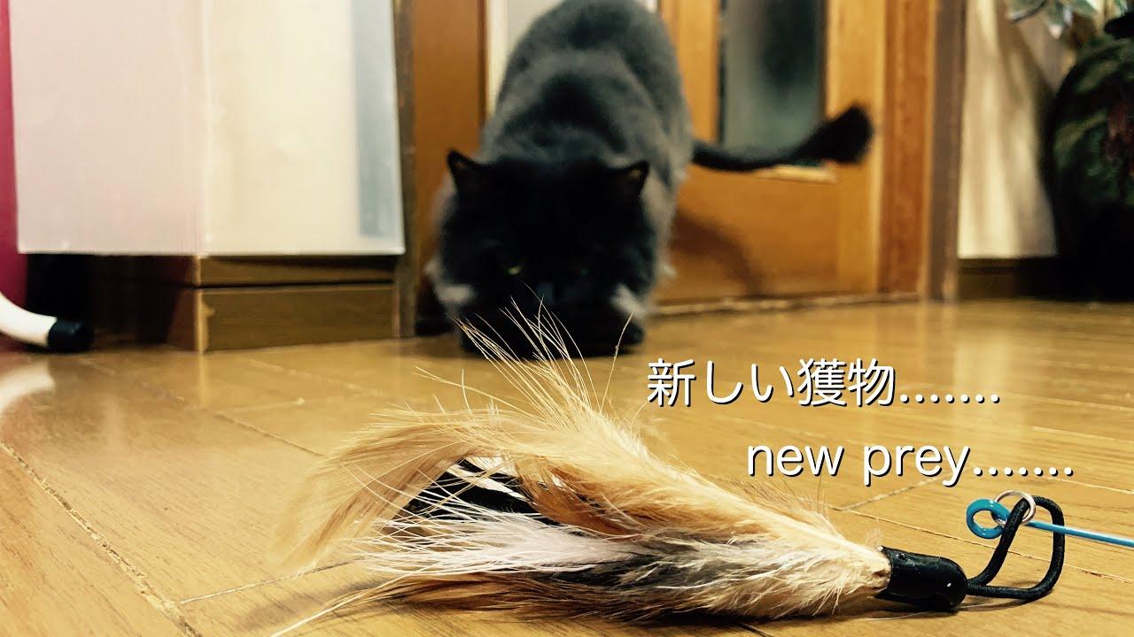 新しい獲物.......   new prey.......