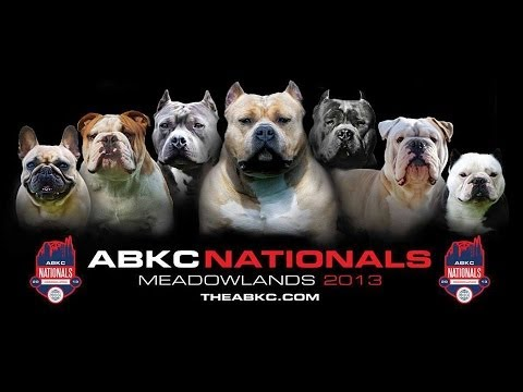 ABKC (American Bully Kennel Club) NATIONALS 2013