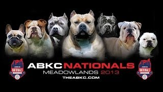 abkc american bully kennel club nationals 2013
