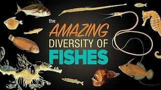 The Amazing Diversity of Fishes